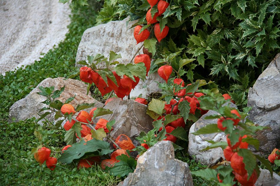 Catalogo piante perenni e graminacee  Vivaio con vendita ...