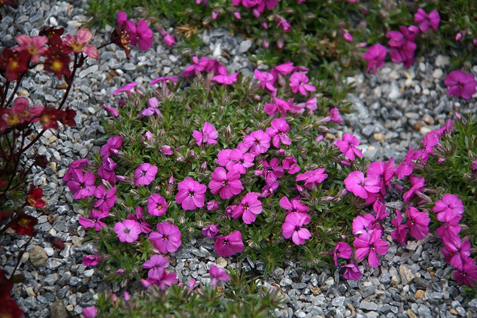 Catalogo piante perenni e graminacee vivaio con vendita for Piante fiorite perenni da esterno