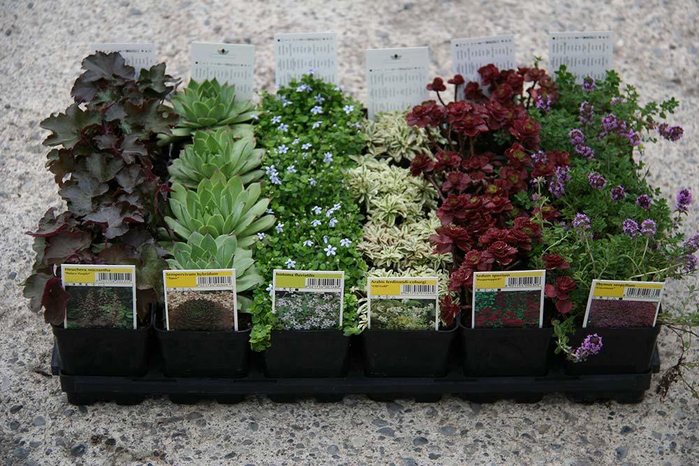 Aiuole con piante perenni mp93 pineglen for Piante perenni per bordure