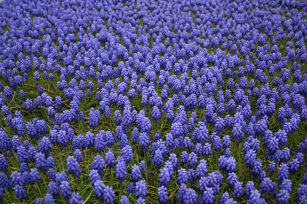 Piante Da Bordura Pieno Sole : Cosa sono e come si mantengono le piante perenni antica